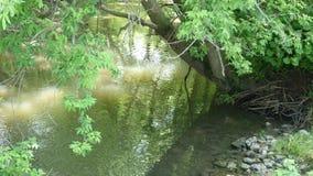 河的边缘 库存照片