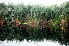 河的里德 免版税库存照片