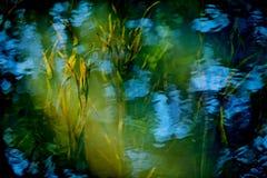 河的水下的植物 库存图片
