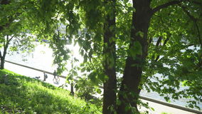 河看法运输沿城市` s堤防的航行 股票录像