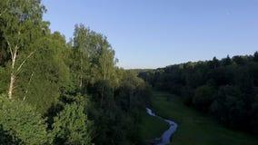 河绕的鸟瞰图通过森林地板 股票视频