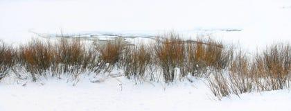 河蛇冬天 库存图片