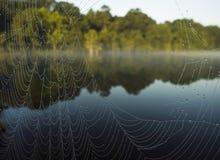 河蜘蛛网 库存照片
