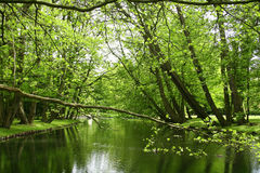 """河视图在GdaÅ """"的sk,波兰公园 库存图片"""