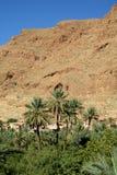 绿洲河谷在干燥沙漠在北非 库存照片