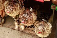 河豚或河豚在纪念品店 刺顿鱼 免版税库存照片