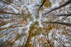 河边低地和蓝天,秋天,森林Casentinesi,托斯卡纳叶子  免版税图库摄影