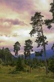 河边低地岸边的森林在巴法力亚阿尔卑斯 免版税库存照片
