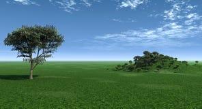 河边低地槭树 库存图片