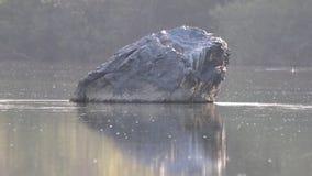 河边区地方公园,索诺马酒乡,加利福尼亚 股票视频