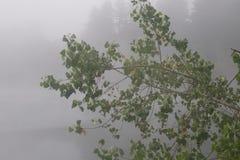 河边区地方公园-是分钟在温莎西部和围拢由经典酒乡风景 免版税图库摄影