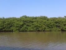 河边 库存照片