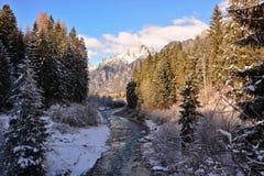河通过森林跑在一个晴天 库存照片