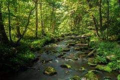 河长的曝光森林木树树水 免版税库存图片