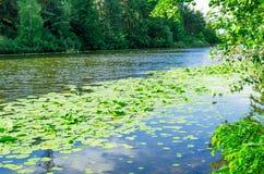 河长满与荷花 库存图片