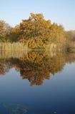 河风景和秋天木头 库存照片