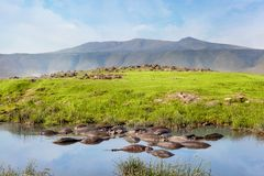 河马水池在serengeti国家公园 大草原和徒步旅行队 免版税库存图片
