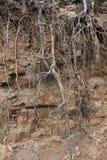 河高河岸有植物根的  库存图片