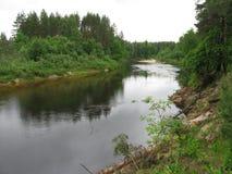 河,森林 免版税库存图片