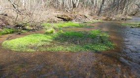 河绿叶 库存图片