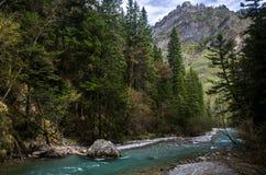 河&森林在优胜美地国家公园 免版税库存图片