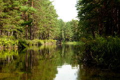 绿河 库存照片