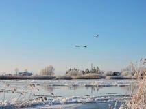 河Atmata和多雪的树,立陶宛 免版税图库摄影