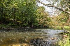 河Brda在Kujawsko-Pomorskie地区在波兰-自然保护在图霍拉附近叫Piekelko 免版税库存图片