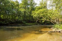 河Brda在Kujawsko-Pomorskie地区在波兰-自然保护在图霍拉附近叫Piekelko 图库摄影