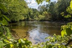 河Brda在Kujawsko-Pomorskie地区在波兰-自然保护在图霍拉附近叫Piekelko 免版税图库摄影