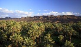 河Draa,摩洛哥,非洲的谷 免版税库存照片
