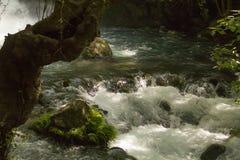 河Hermon, Banias自然保护,以色列 库存图片