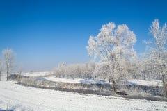 河oglio的沼泽在冬天 库存图片