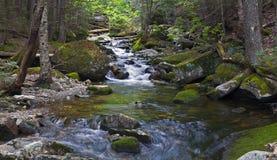 河Sream登上Washinton地区通过Ammonoosuc山沟足迹 图库摄影