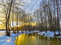 黄色日落在早期的春天 免版税库存照片