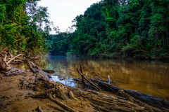 河Tembeling在大汉山国家公园,马来西亚 库存照片