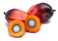 油棕榈树果子 免版税库存图片