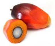 油棕榈树果子 免版税图库摄影