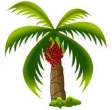 油棕榈树树 免版税库存图片