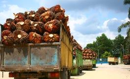油棕榈树用品 库存图片