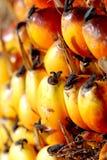 油棕榈树种子 免版税库存照片