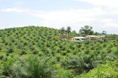 油棕榈树种植园 免版税库存照片
