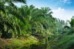 油棕榈树种植园 免版税库存图片