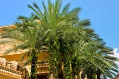 油棕榈树种植园 免版税图库摄影