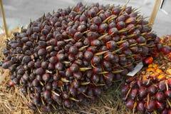 油棕榈树 库存照片