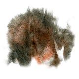 油漆飞溅黑色布朗颜色墨水水彩被隔绝的冲程泼溅物水彩aquarel刷子 库存图片