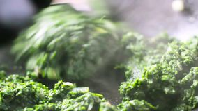 油炸烹饪菠菜用在长柄浅锅的葱 影视素材