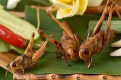 油煎的孟买蝗虫(Patanga succincta Linn ) 库存图片