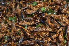 油煎的昆虫在曼谷 库存图片