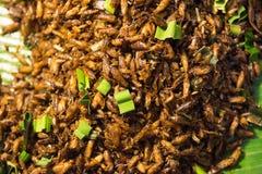 油煎的昆虫食物在泰国 库存图片